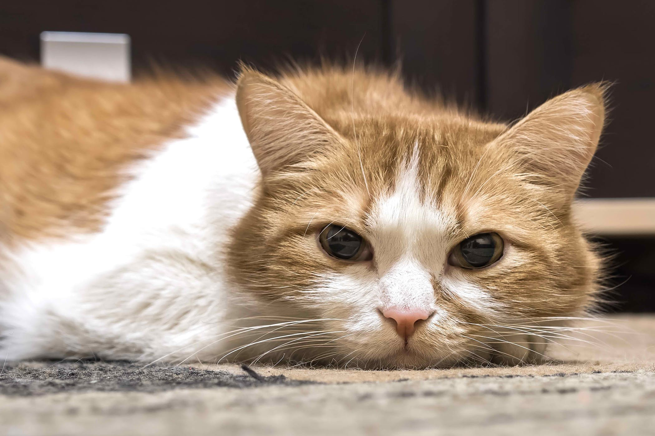 Calcivirosis in cats: symptoms and treatment 3