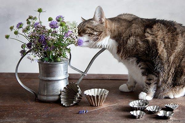 Sedating a cat for vet visit cost