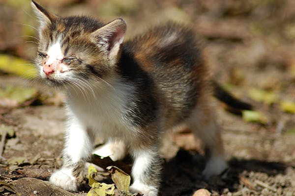 Spinal Cord Disorders in Cats