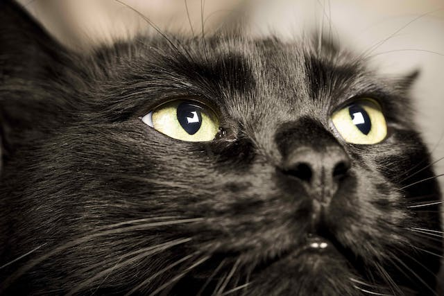 Thermal Burns in Cats - Symptoms, Causes, Diagnosis, Treatment, Recovery, Management, Cost