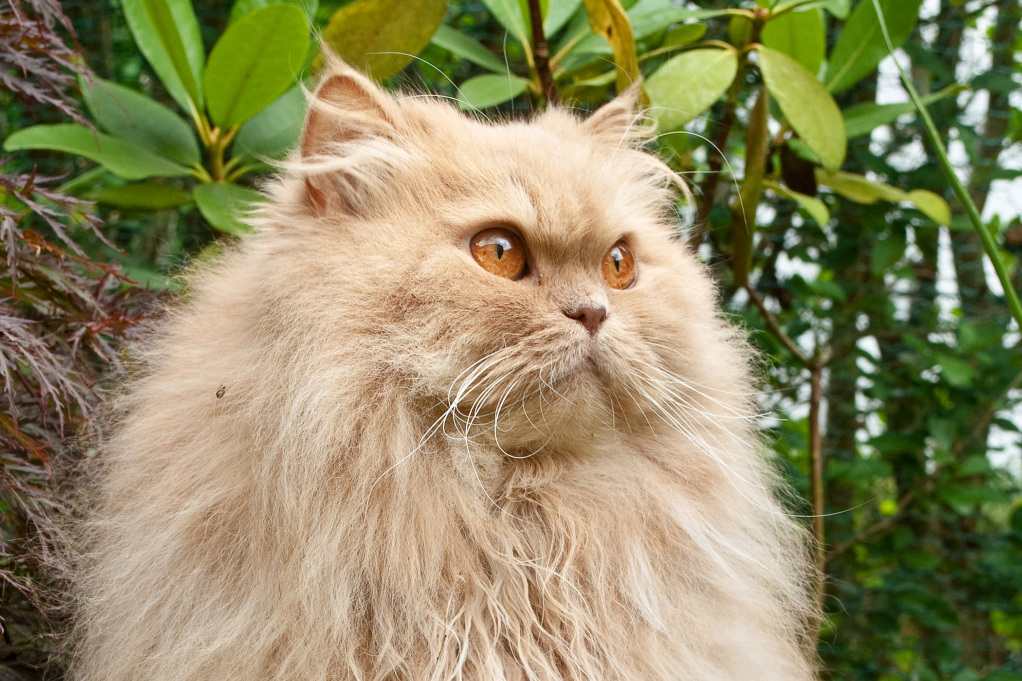 Trichinellosis in Cats