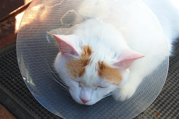 45d36e904b Upper and Lower Jaw Fractures in Cats - Symptoms