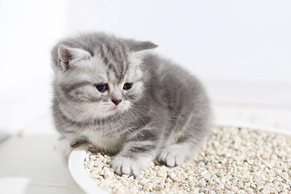 reddit startled cats