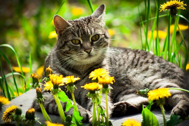 Vectra Allergy in Cats - Symptoms, Causes, Diagnosis, Treatment, Recovery, Management, Cost