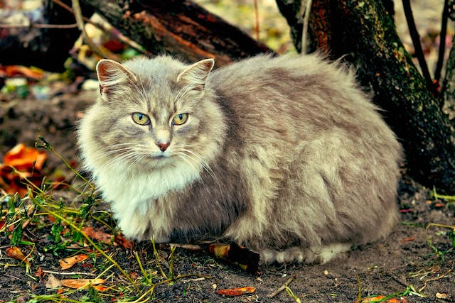 Vitamin B1 Deficiency in Cats - Symptoms, Causes, Diagnosis, Treatment, Recovery, Management, Cost