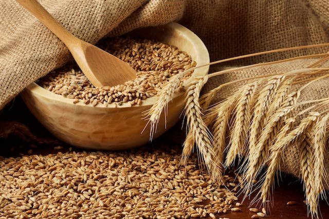 Wheat Allergy in Cats - Symptoms, Causes, Diagnosis, Treatment, Recovery, Management, Cost