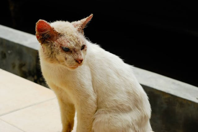 Why is my cat balding?