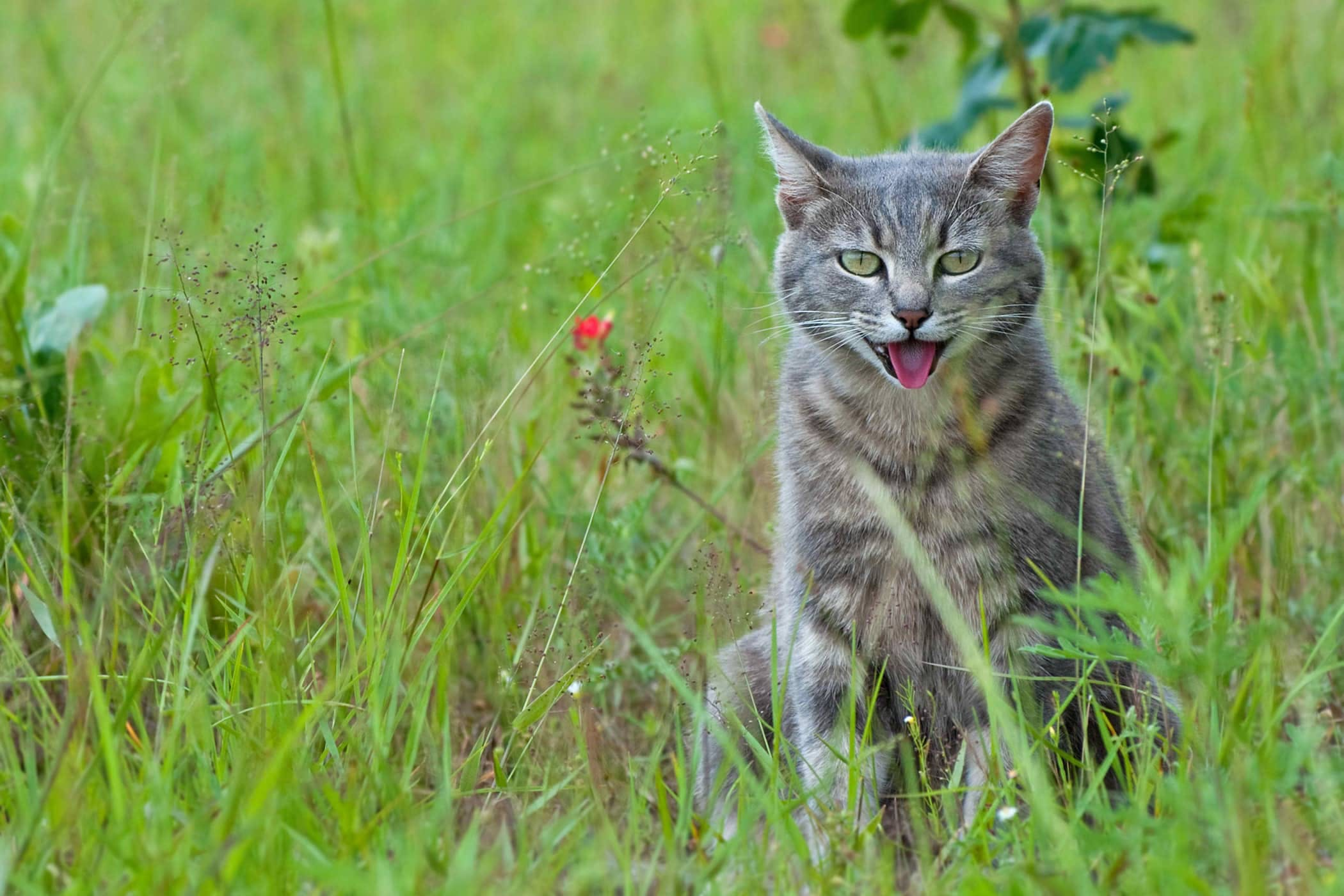 how to remove cat spray