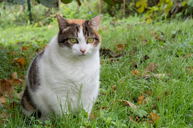 Yogurt Allergy in Cats - Symptoms, Causes, Diagnosis, Treatment, Recovery, Management, Cost
