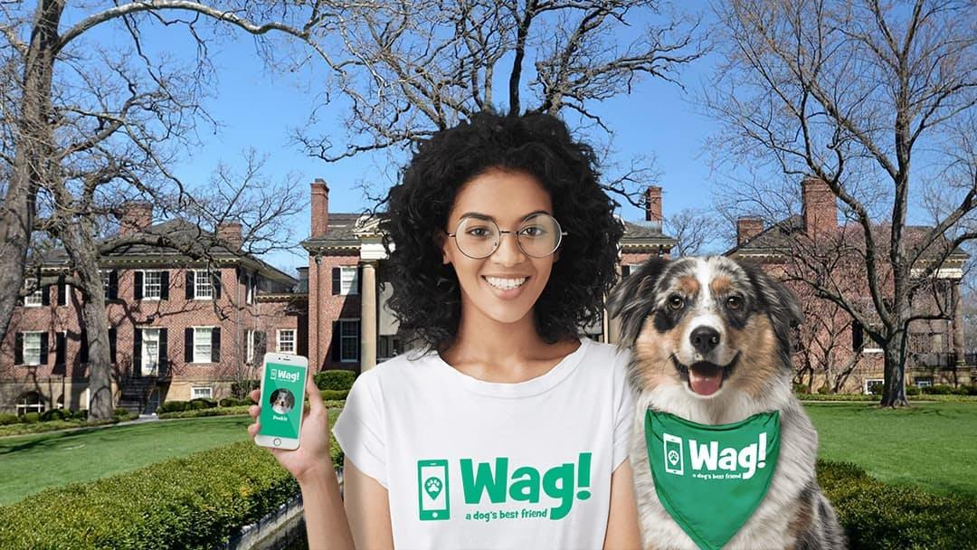 Dog Walkers In Wheaton Il Dog Walking Near You Wag