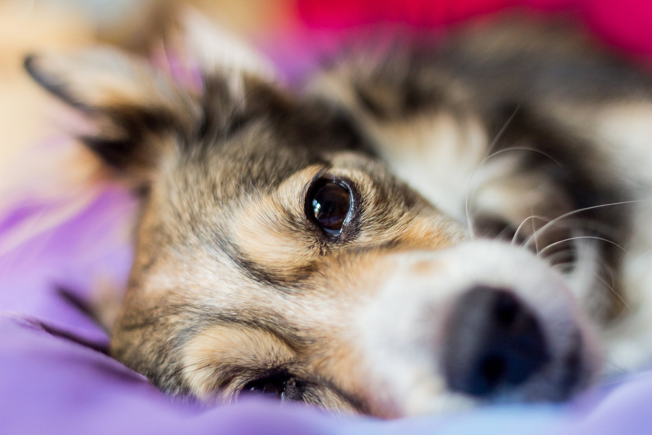 Abdominal Lymph Node Removal in Dogs - Procedure, Efficacy, Recovery