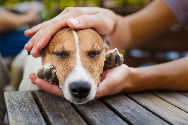 Accumulation of Air Between Chest and Lungs in Dogs - Symptoms, Causes, Diagnosis, Treatment, Recovery, Management, Cost