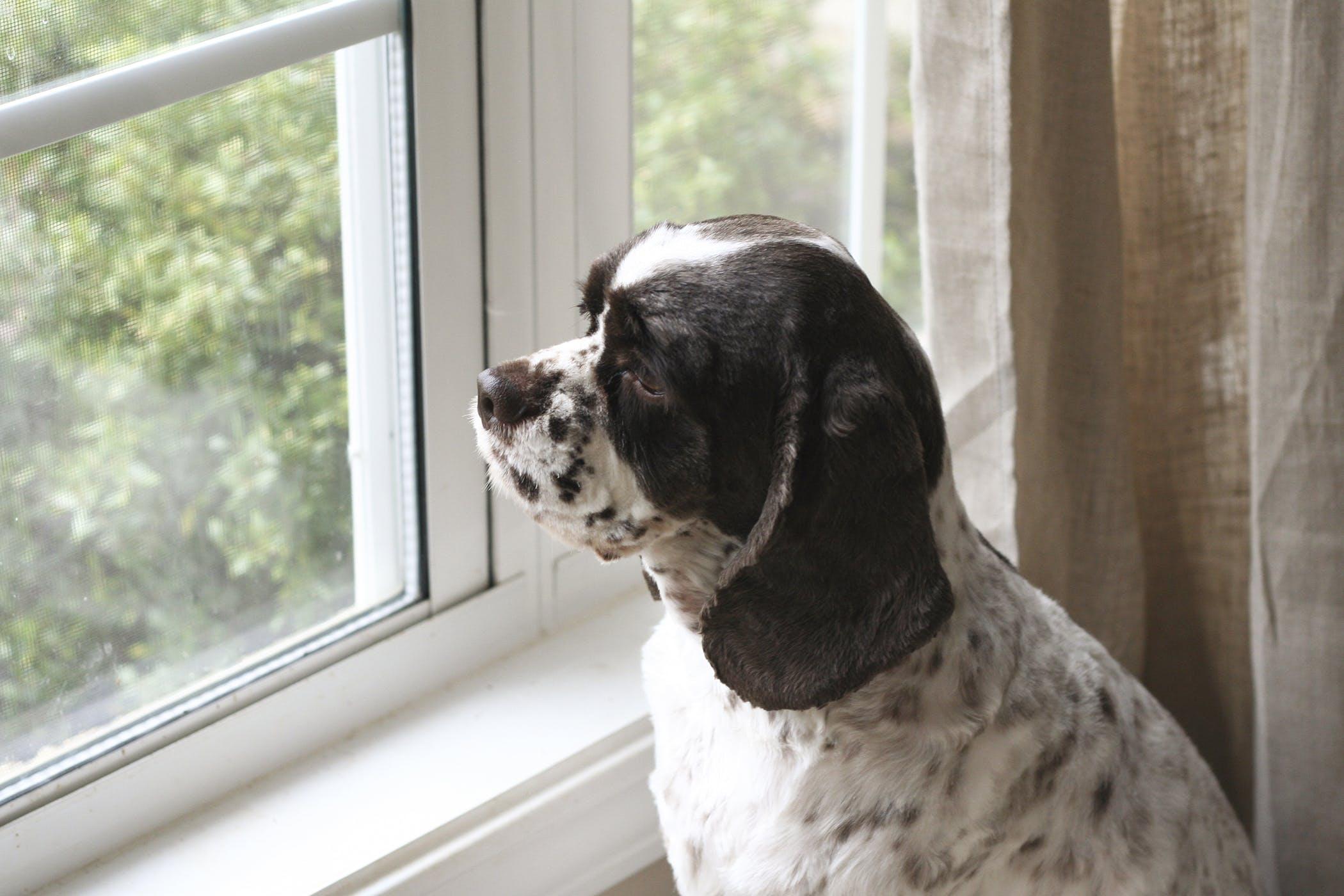 Acute Leukemia in Dogs - Symptoms, Causes, Diagnosis