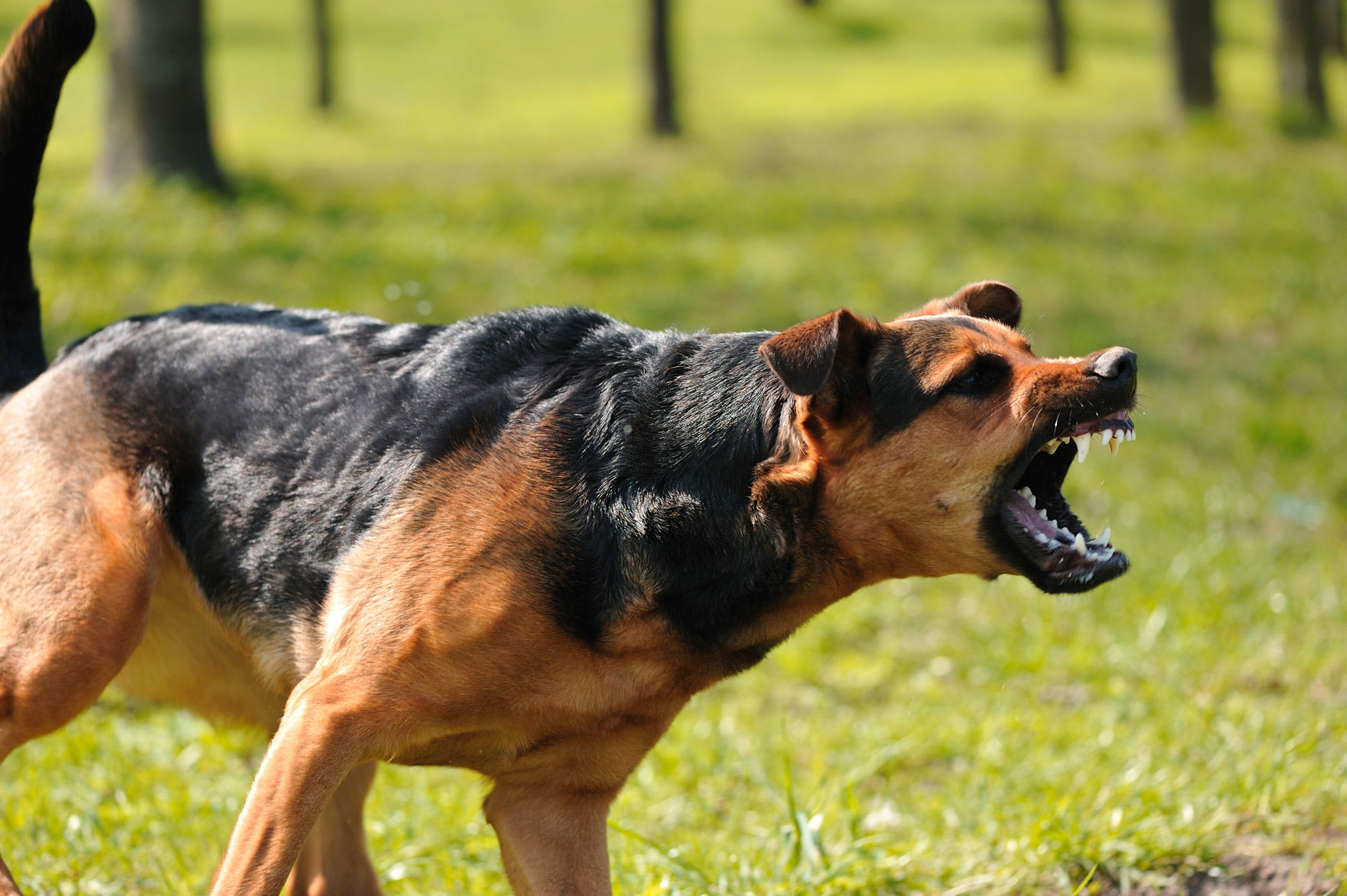 Aggression Toward Familiar People in Dogs Symptoms Causes