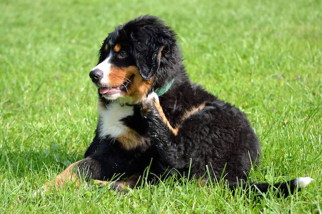 Allergy Treatment in Dogs - Conditions Treated, Procedure, Efficacy, Recovery, Cost, Considerations, Prevention