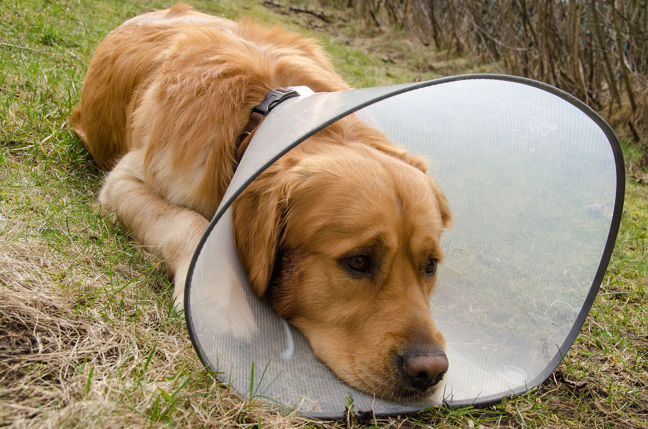 Can Dogs Catch Human Bacterial Infections