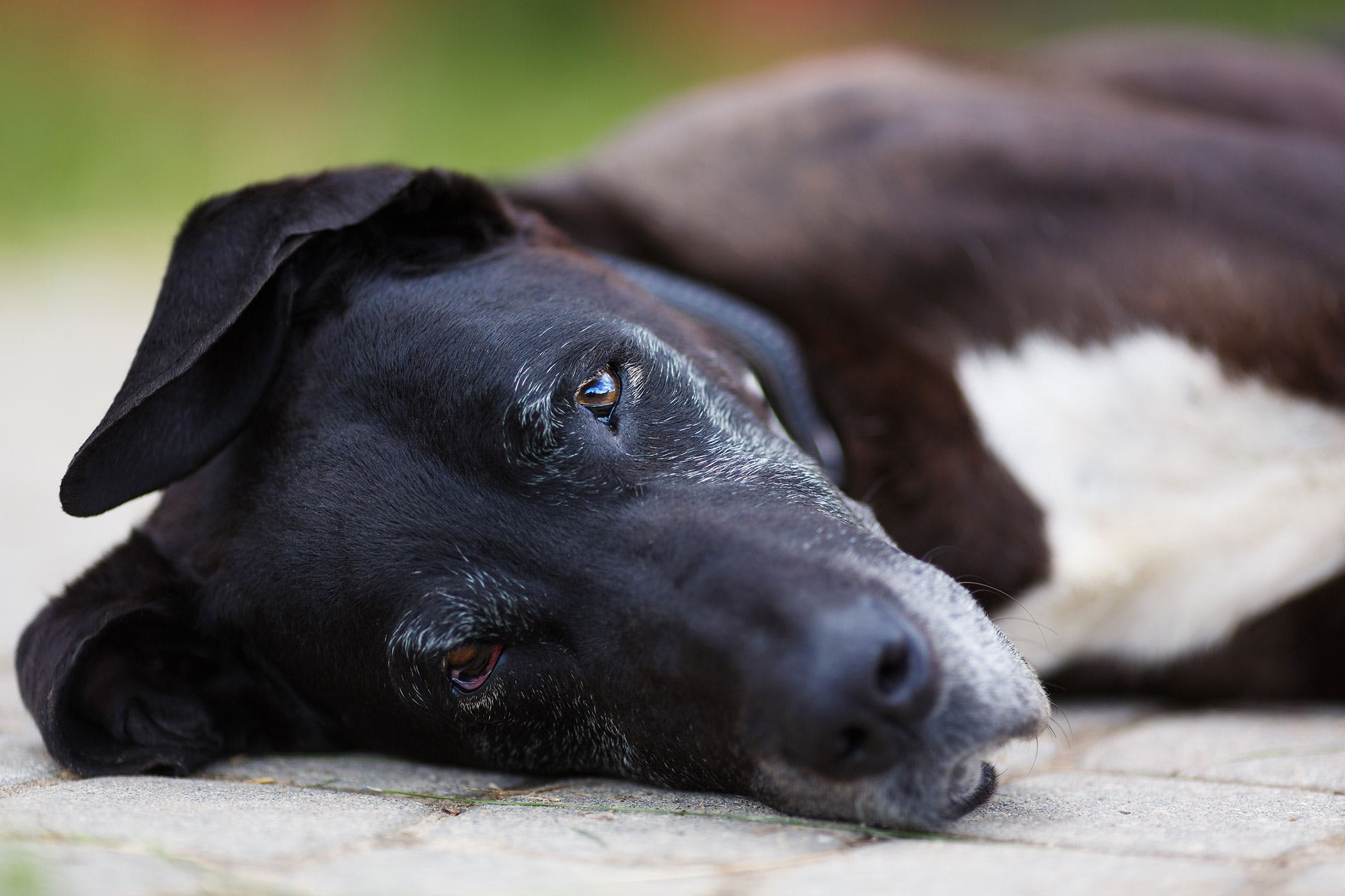 Arthritis of Multiple Joints in Dogs
