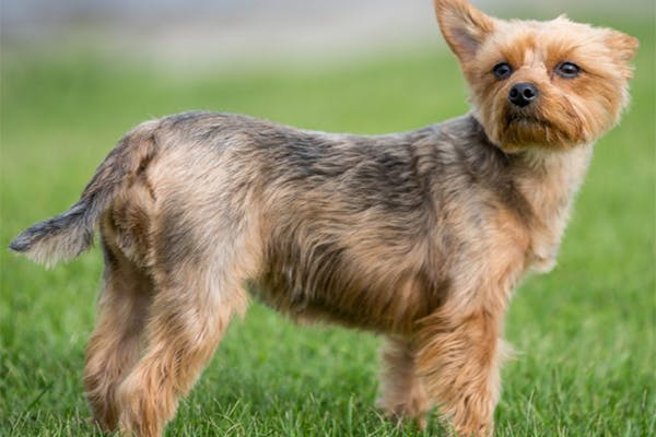 Atopic Dermatitis in Dogs - Symptoms, Causes, Diagnosis, Treatment, Recovery, Management, Cost