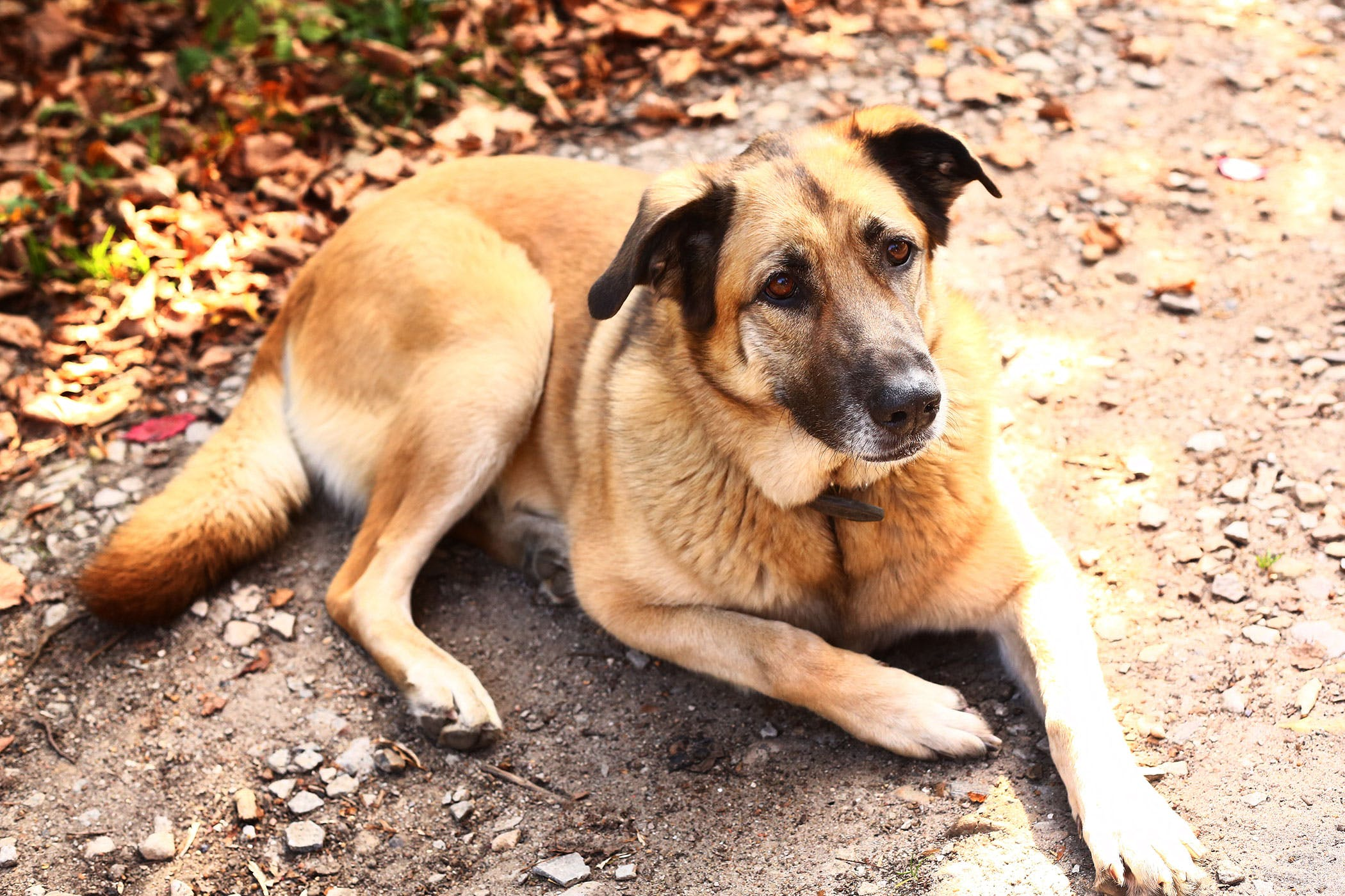 Can Urinary Tract Infection Cause Anemia In Dogs