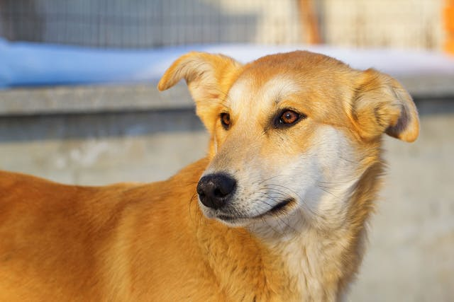 Bacterial Infection (Tyzzer Disease) in Dogs - Symptoms, Causes, Diagnosis, Treatment, Recovery, Management, Cost