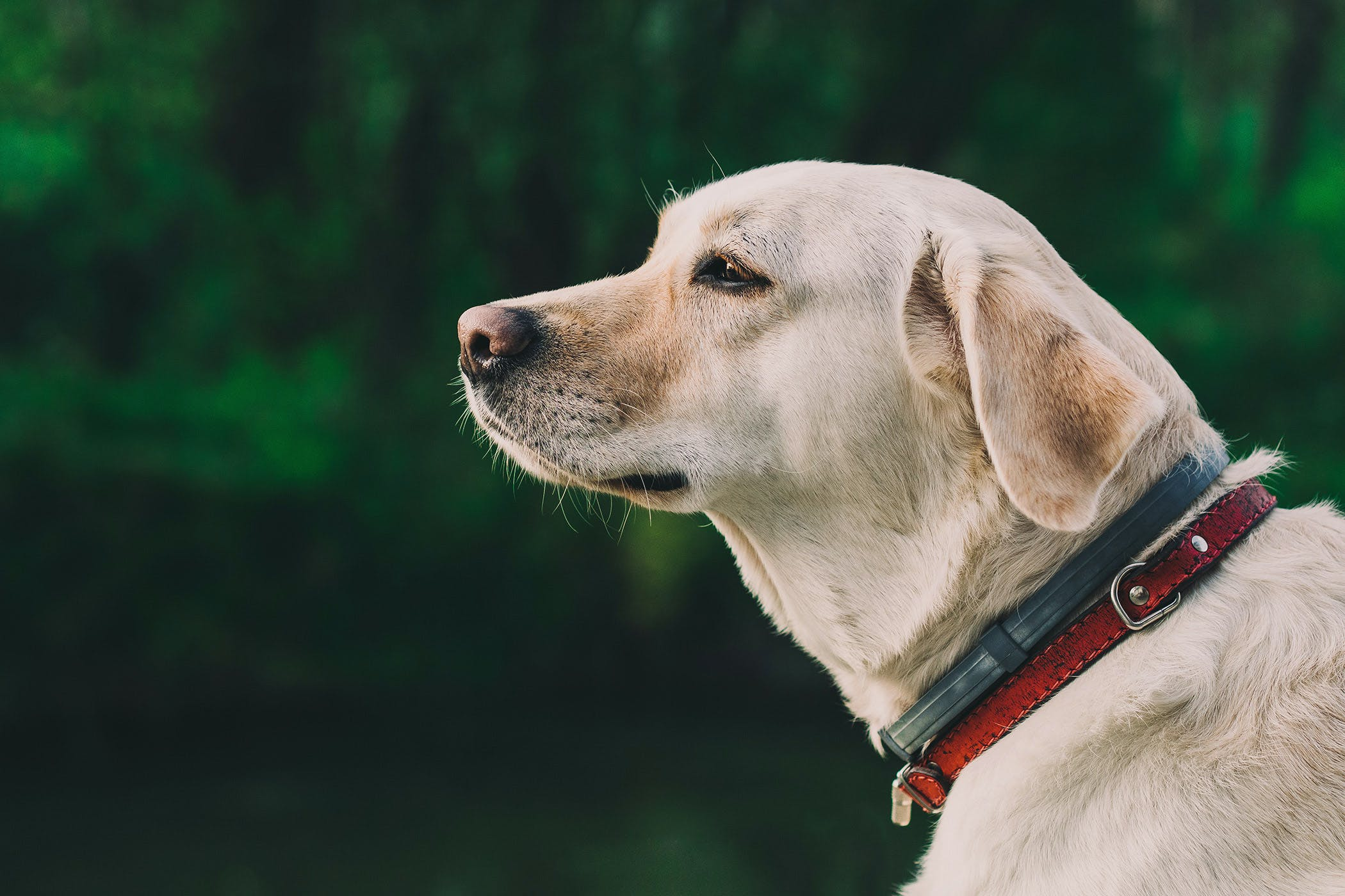 basal cell tumor in dogs symptoms causes diagnosis