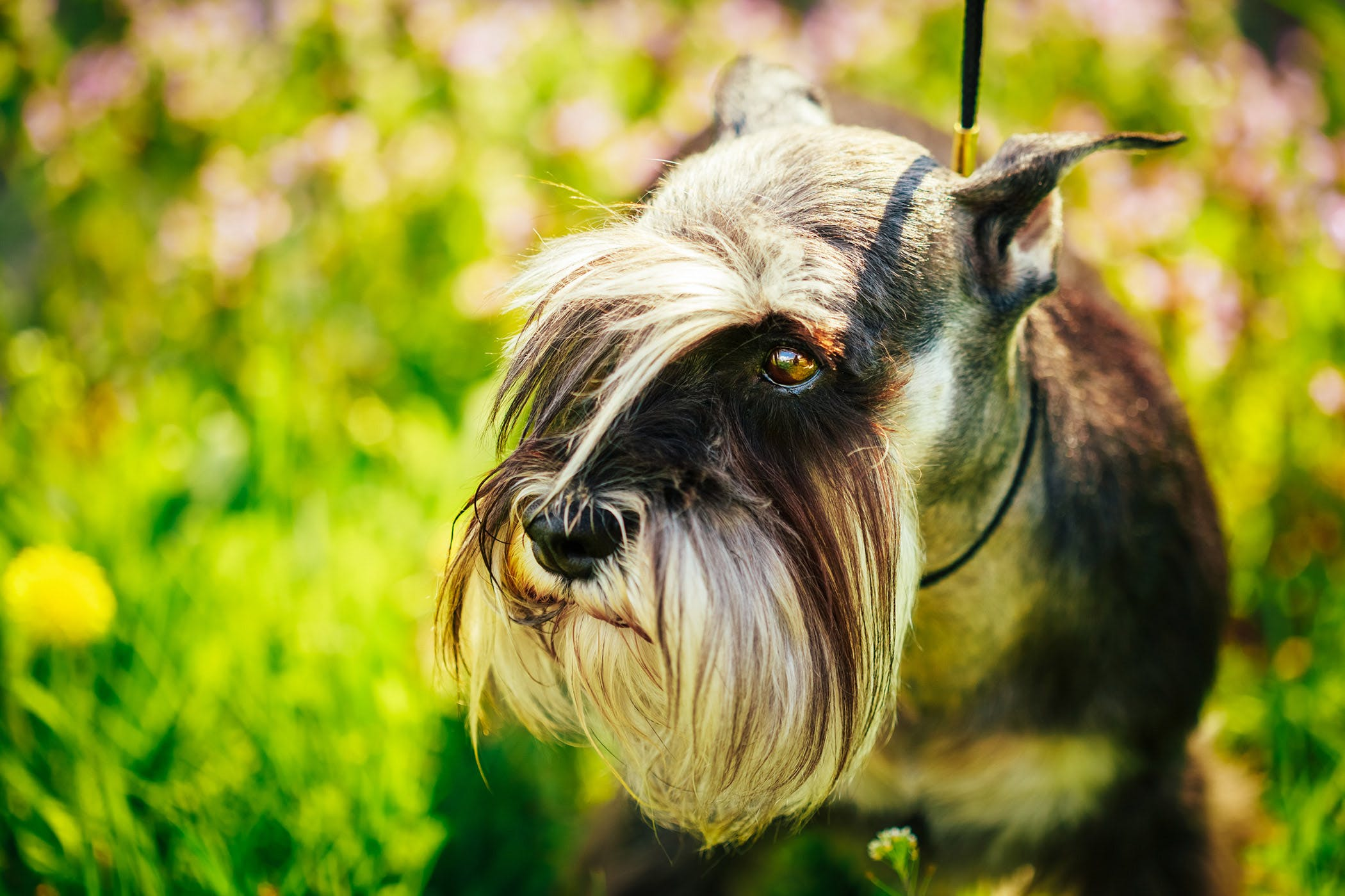 Bile Duct Obstruction In Dogs Symptoms Causes Diagnosis