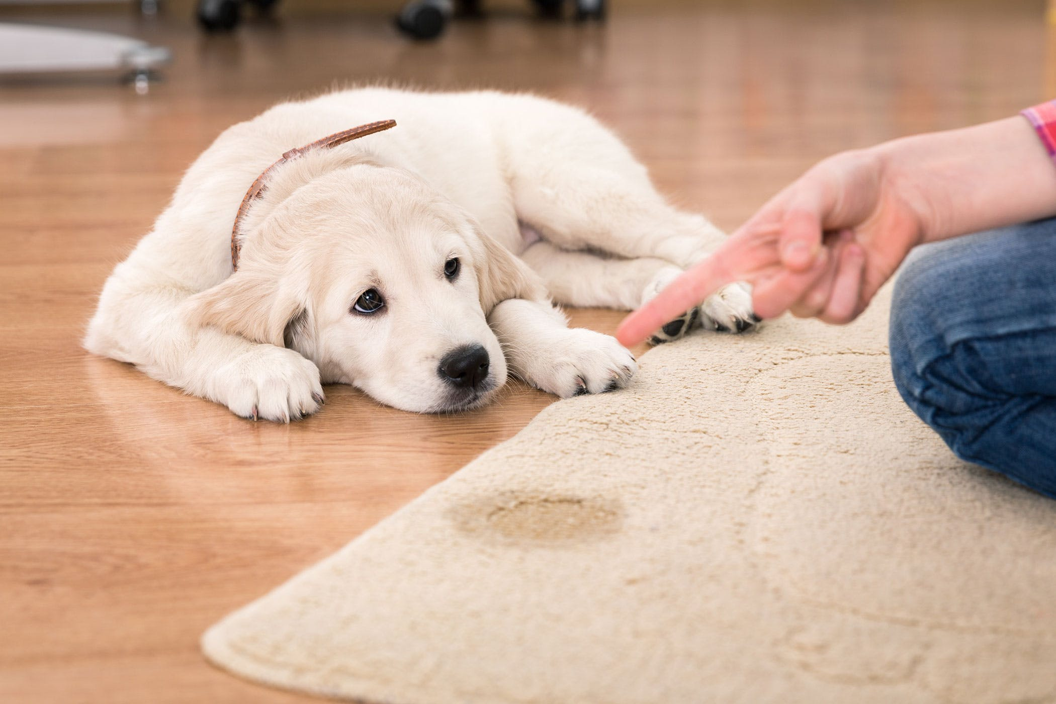 Bladder Stones in Dogs - Symptoms, Causes, Diagnosis
