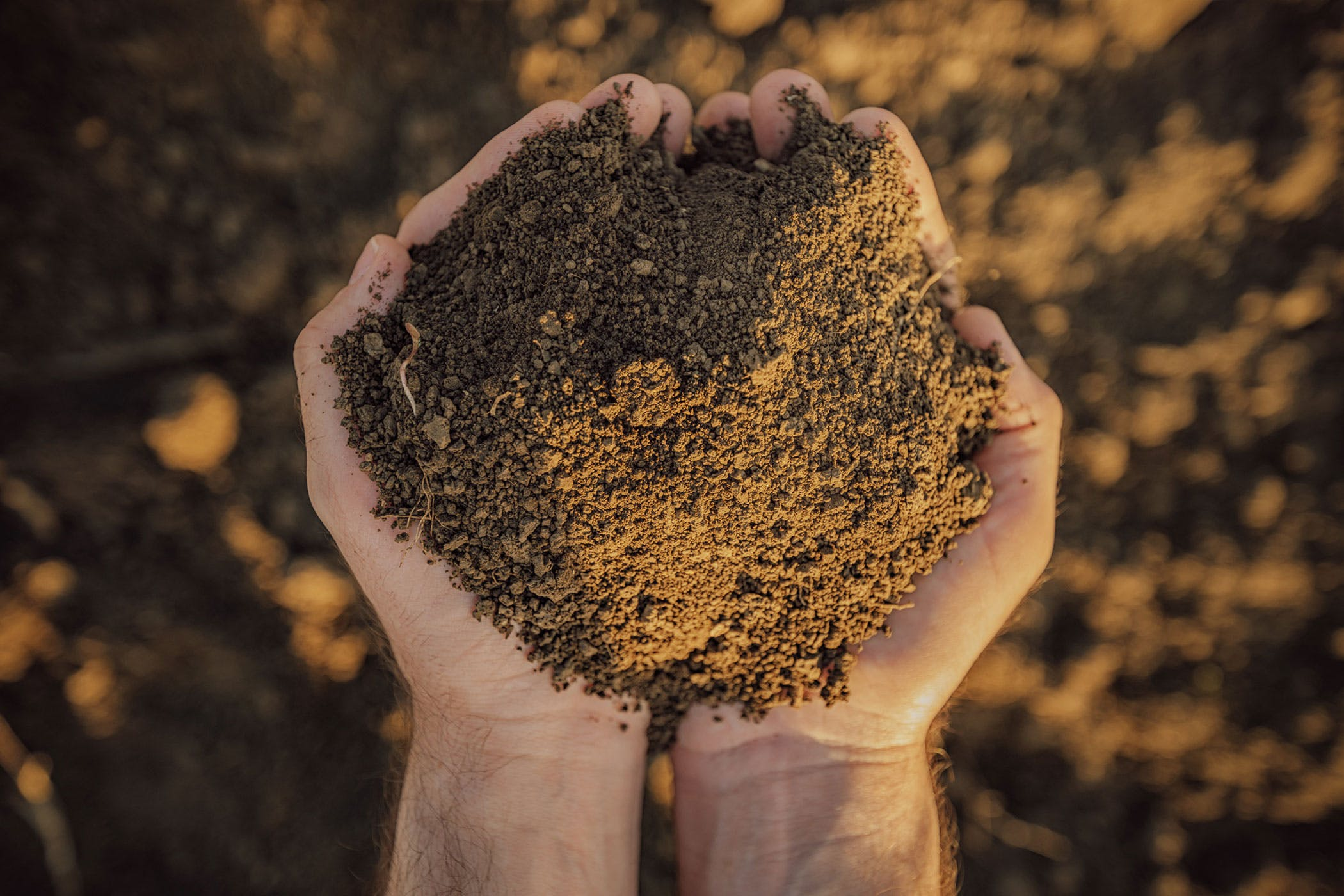 Bone Meal And Blood Meal Fertilizers Poisoning In Dogs