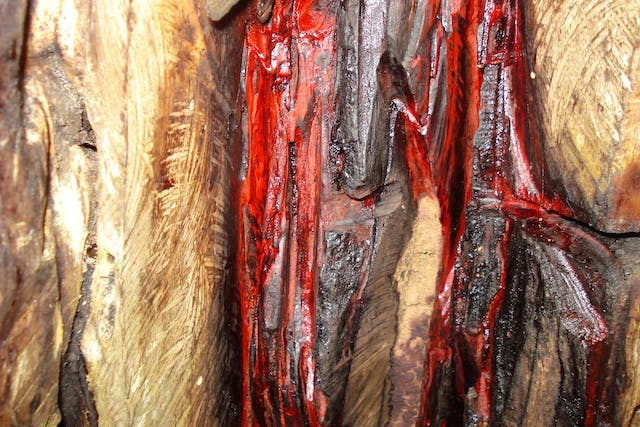 Brazilwood Poisoning in Dogs - Symptoms, Causes, Diagnosis, Treatment, Recovery, Management, Cost
