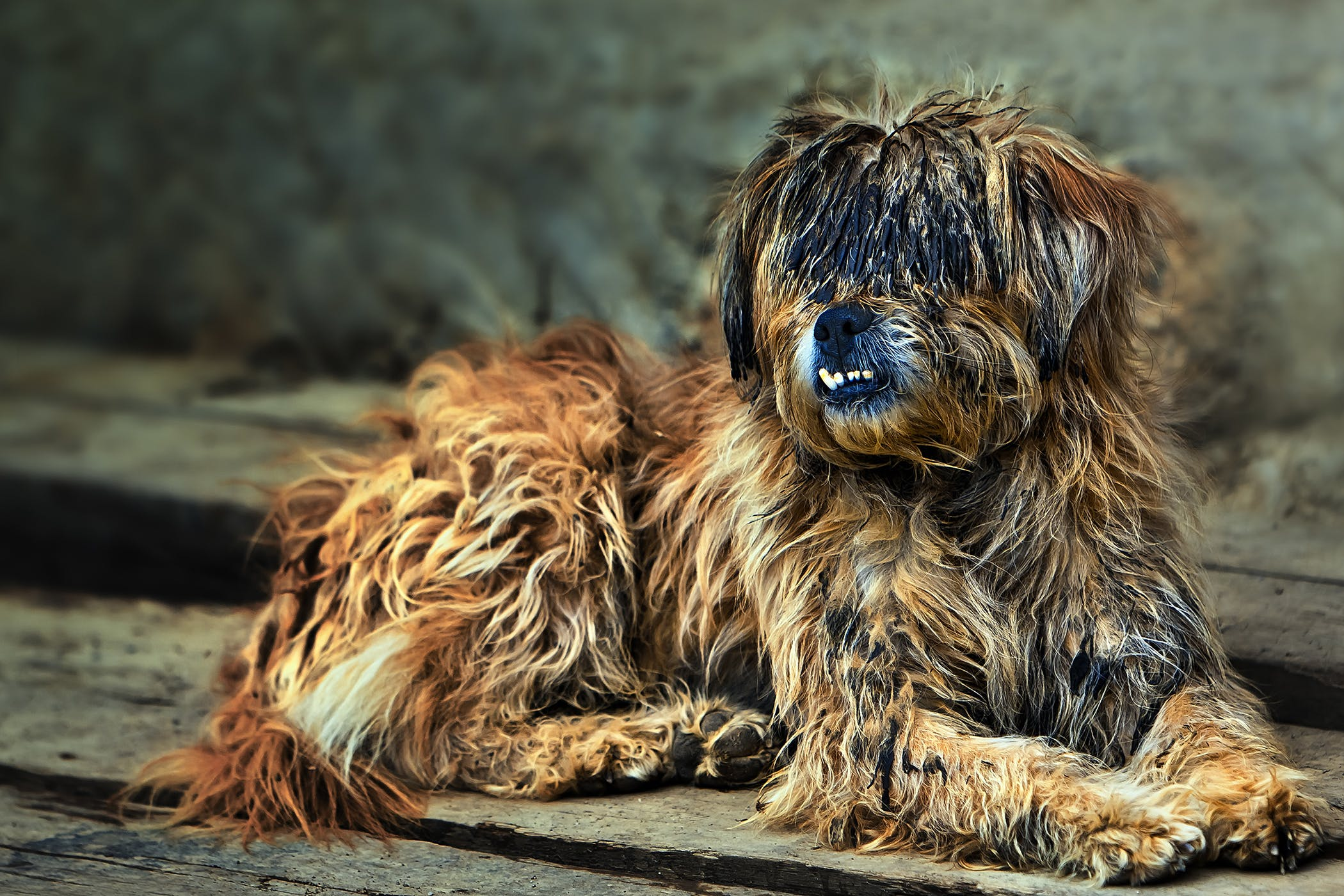 Brittle Coat In Dogs Symptoms Causes Diagnosis