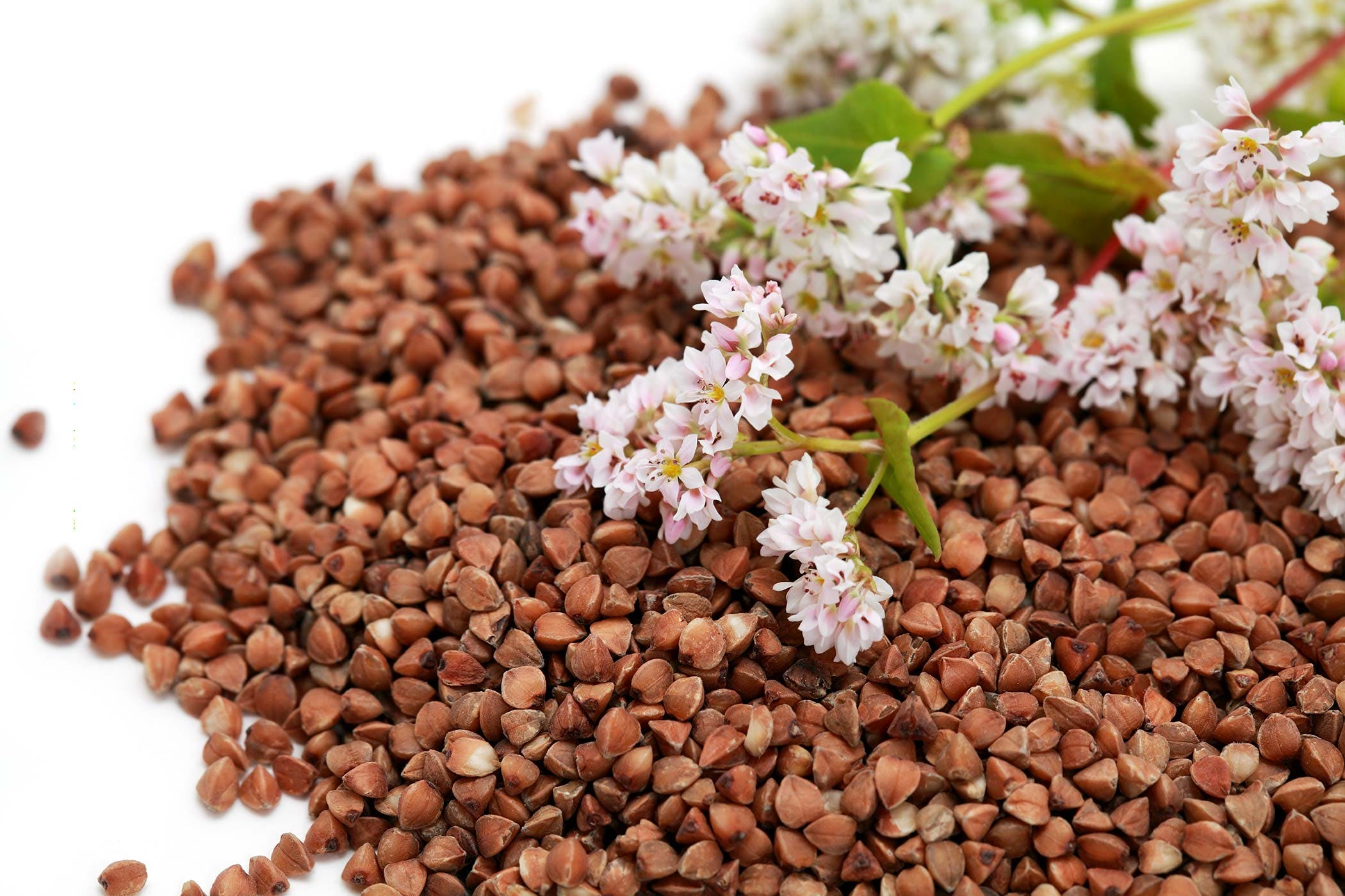 Buckwheat Poisoning in Dogs - Symptoms, Causes, Diagnosis