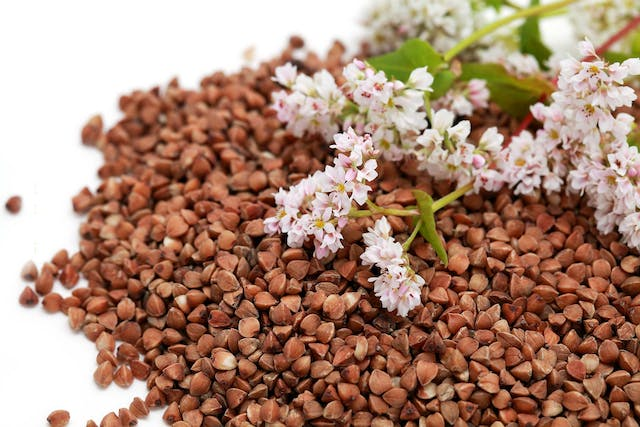 Buckwheat Poisoning in Dogs - Symptoms, Causes, Diagnosis, Treatment, Recovery, Management, Cost