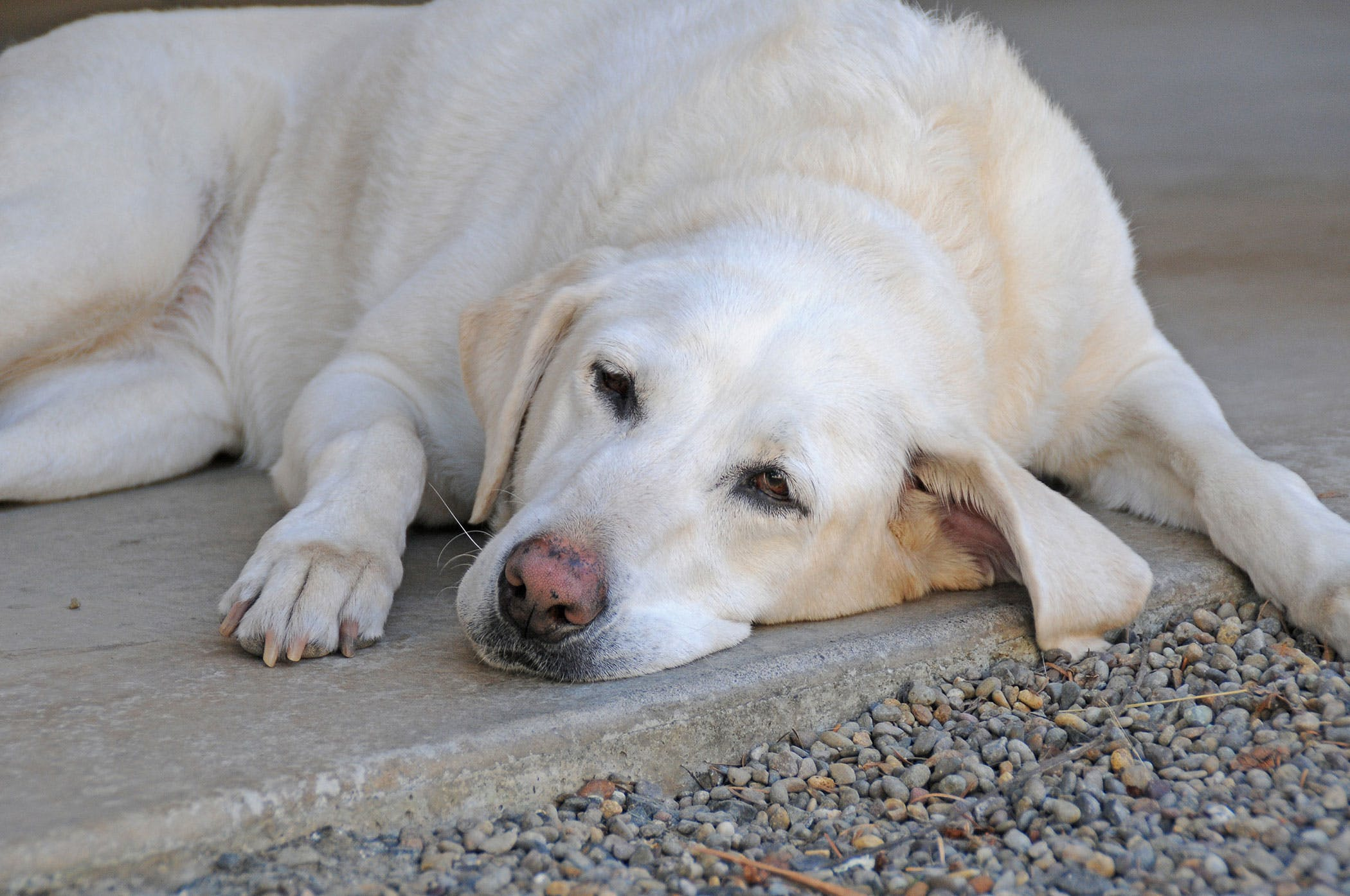 Poisoning in dogs: symptoms and consequences