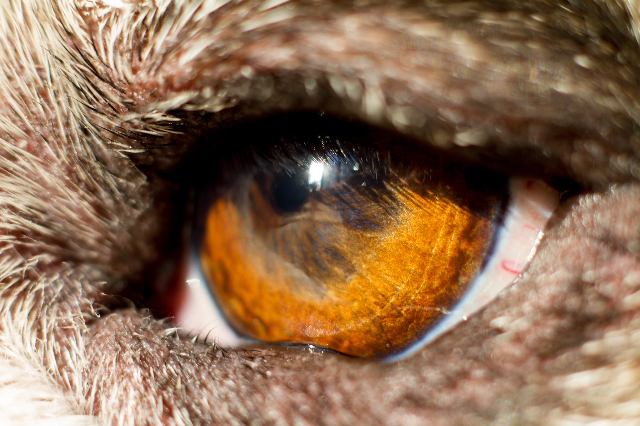 Dog Eye Treatment Cost