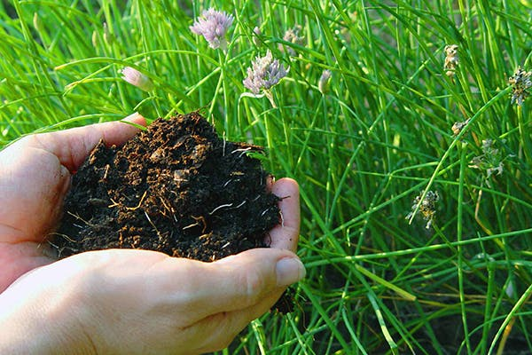 Cocoa Mulch Toxicity in Dogs