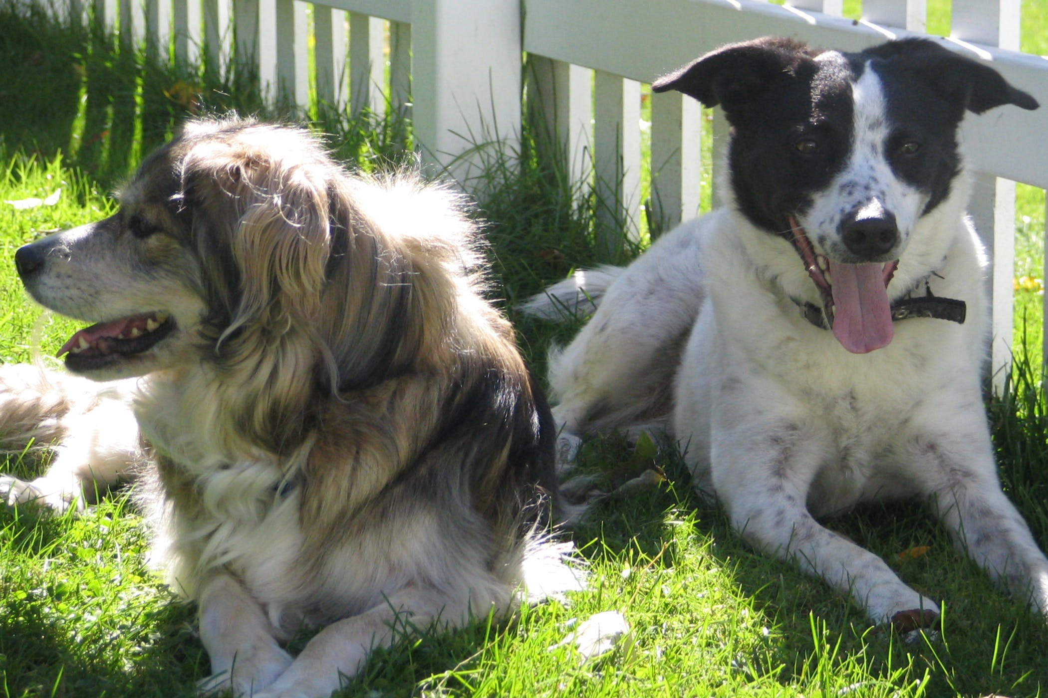Colonic Resection and Anastomosis in Dogs