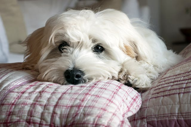 Cryptosporidia in Dogs - Symptoms, Causes, Diagnosis, Treatment, Recovery, Management, Cost