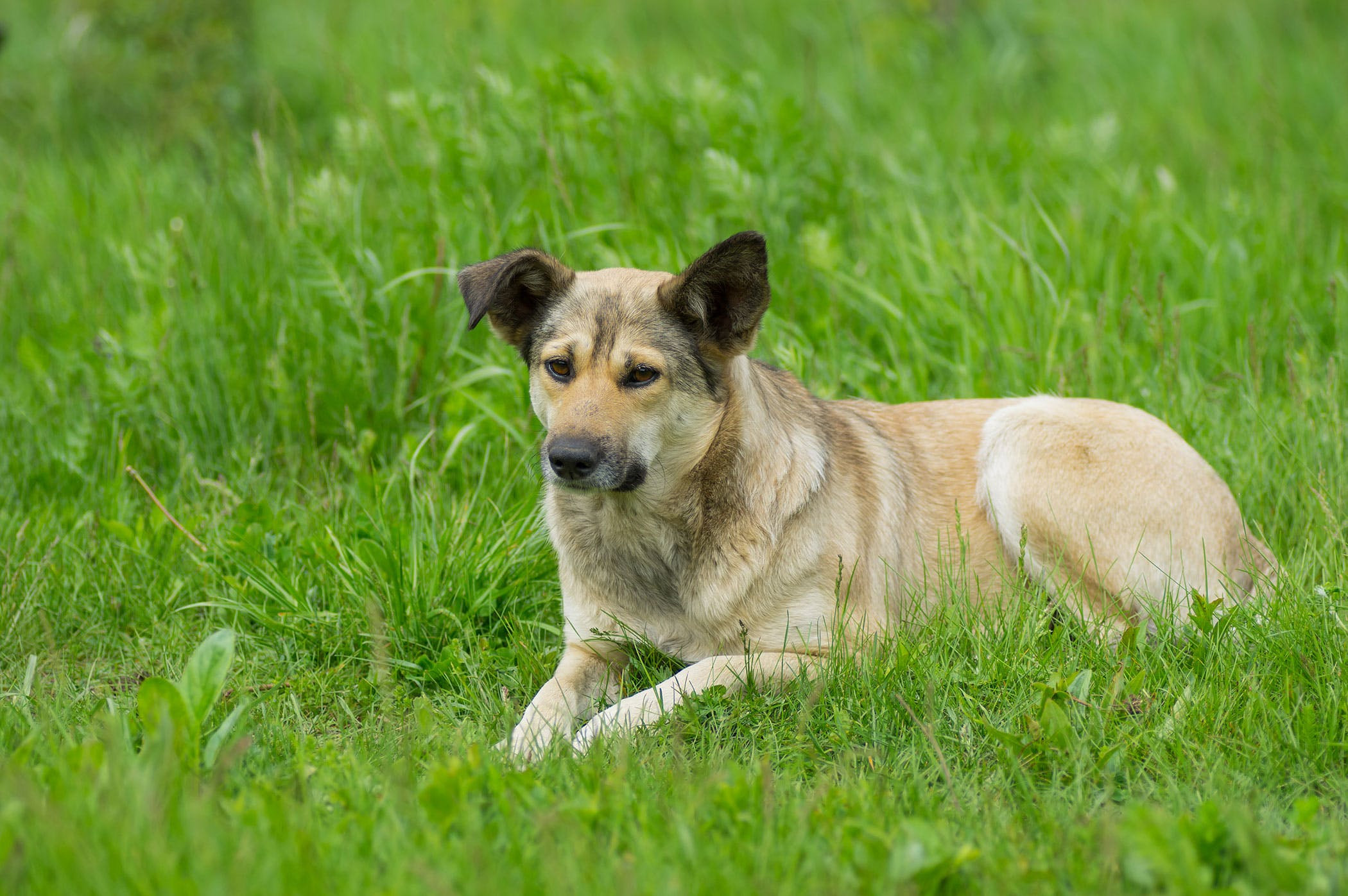 cyanobacteria in dogs symptoms causes diagnosis treatment