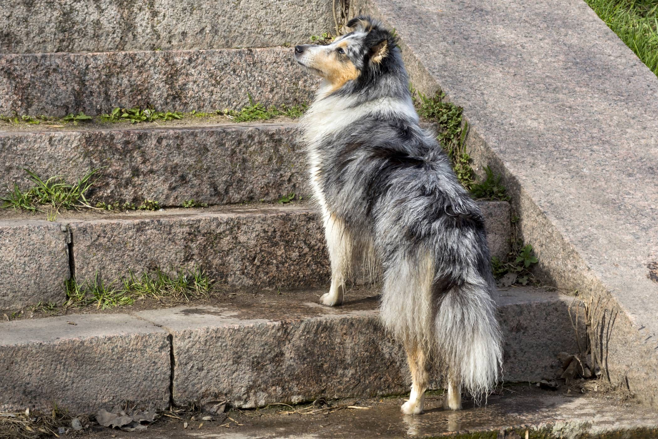 Day Blindness In Dogs Symptoms Causes Diagnosis Treatment