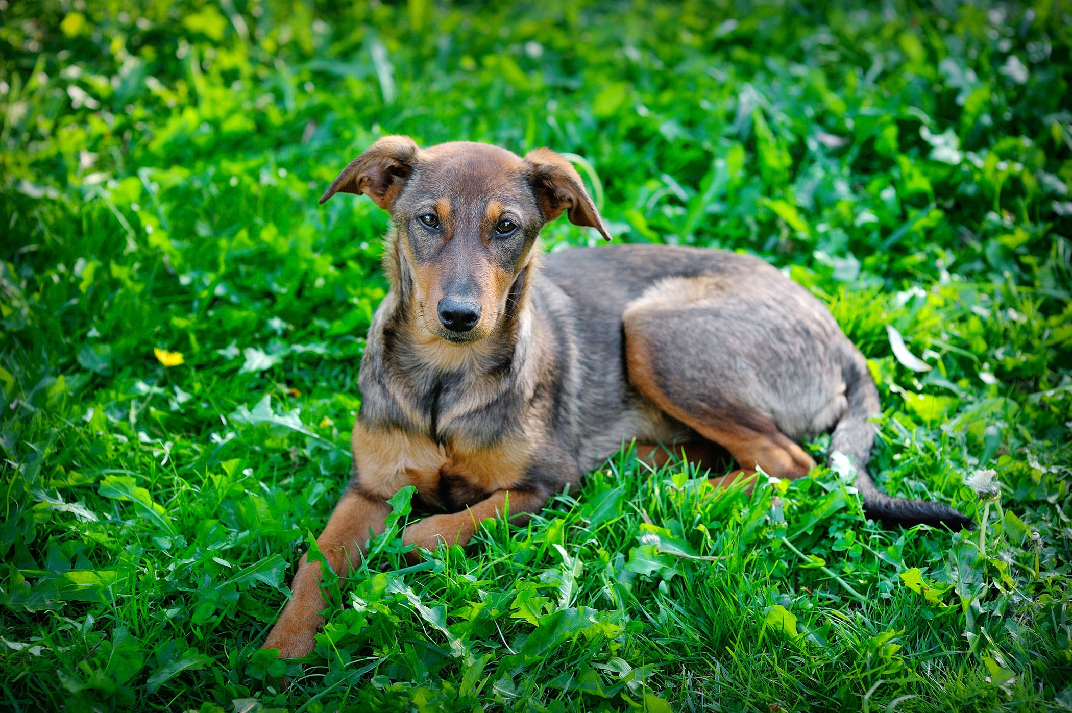 Difficult Defecation and Blood in Stool in Dogs