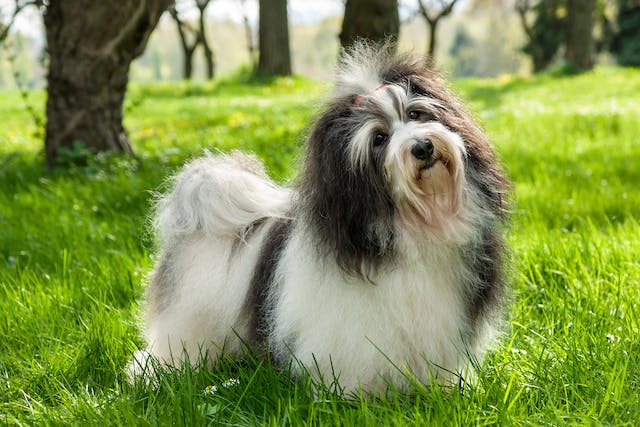 Digit Amputation in Dogs - Conditions Treated, Procedure, Efficacy, Recovery, Cost, Considerations, Prevention