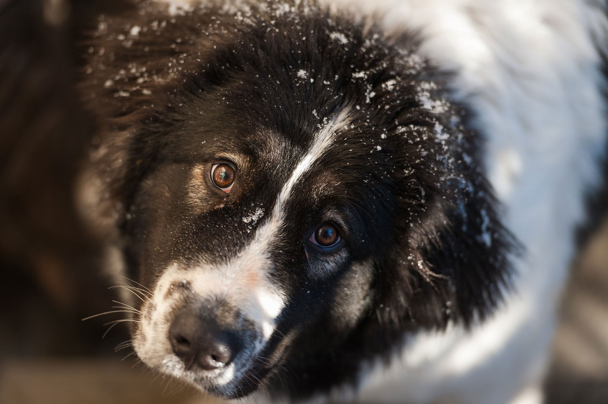 Diseases of the Orbit of the Eye in Dogs