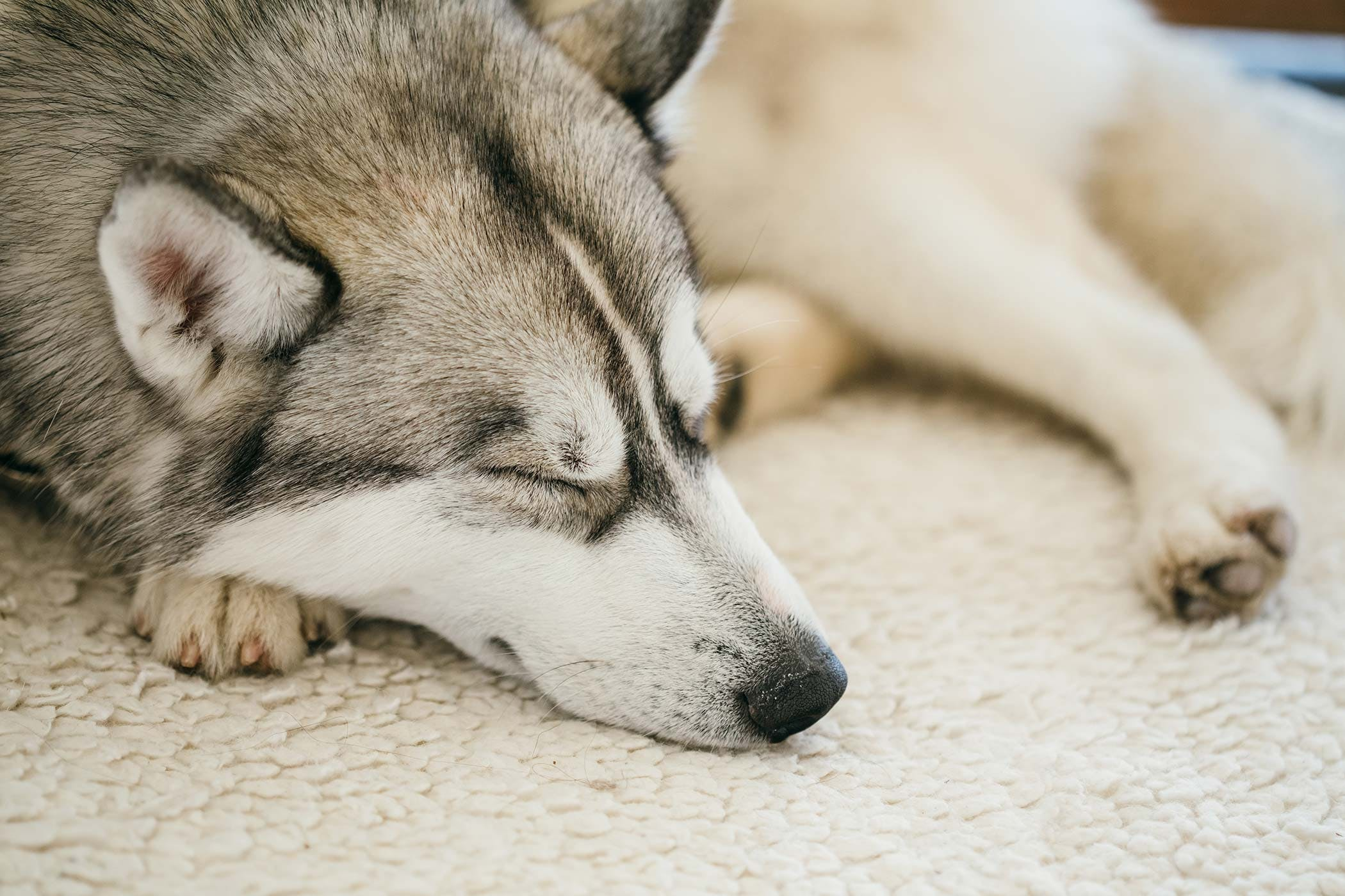 Ear Drops Allergies In Dogs Symptoms Causes Diagnosis