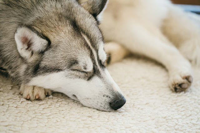 Ear Drops Allergies in Dogs - Symptoms, Causes, Diagnosis, Treatment, Recovery, Management, Cost