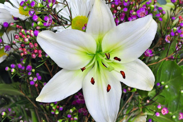 Easter Lily Poisoning in Dogs - Symptoms, Causes, Diagnosis, Treatment, Recovery, Management, Cost
