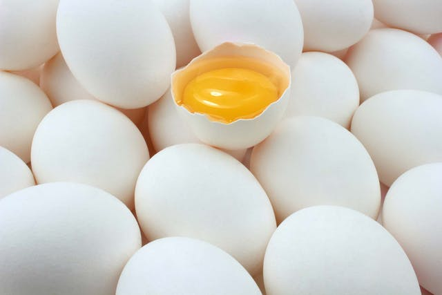 Egg Yolk Allergies in Dogs - Symptoms, Causes, Diagnosis, Treatment, Recovery, Management, Cost