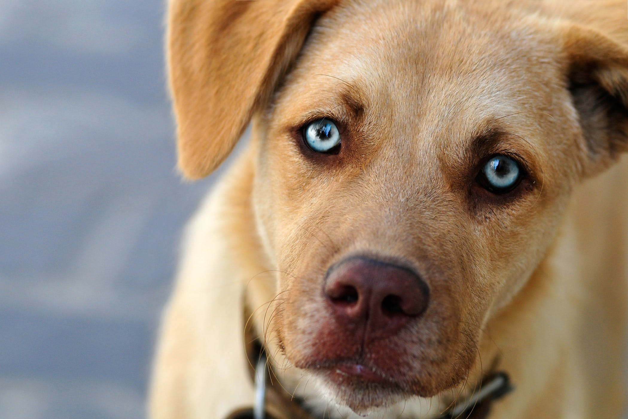 Average Cost Of Eye Surgery For Dogs