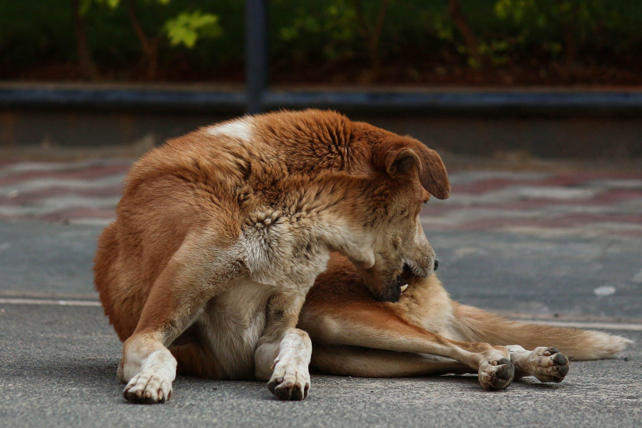 Epidermal Dysplasia in Dogs