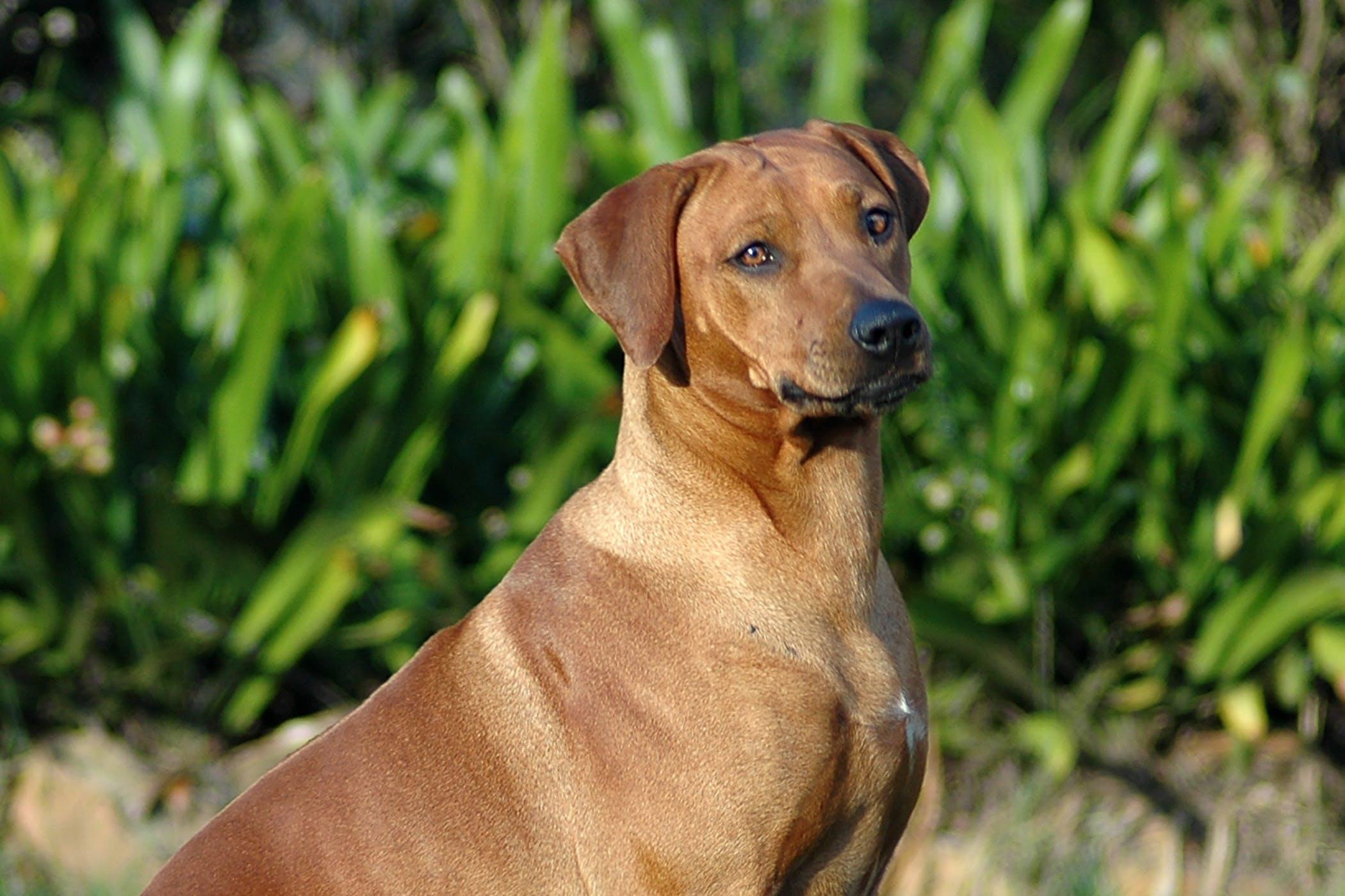 Esophagostomy in Dogs