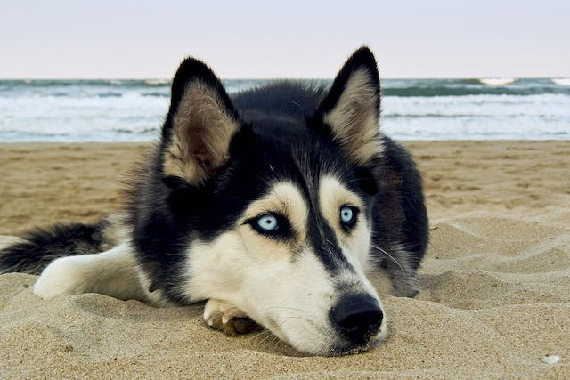 Fatigue and Exercise in Dogs - Signs, Causes, Diagnosis, Treatment, Recovery, Management, Cost